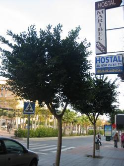 Hostal Maribel,Almería (Almería)