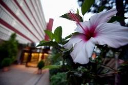 Hotel benilux park en benidorm infohostal - Hostal el jardin benidorm ...