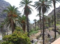 Apartamentos Teodomiro,Valle gran Rey (La Gomera)