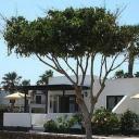 Apartamento Bungalows Playa Limones