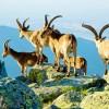 Reserva Natural de la Sierra de Cabras