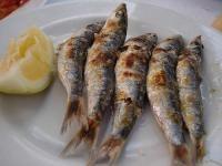 Mejillonería Mediterráneo