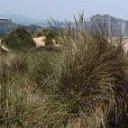 Dunas Naturales de Salinas