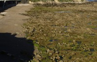 Playa del Cervigón