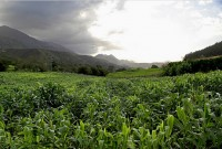 Valle de Celorio