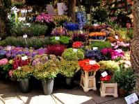 Mercado de las Flores de La Rambla