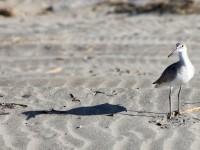 Playa La Ricarda