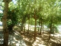 Jardín Botánico María Márquez