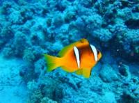 Aquarium-Palacio del Mar de Donostia