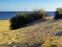Playas de Isla Cristina