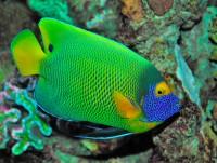 Aquarium de Lanzarote