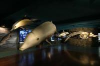 Museo de Cetáceos