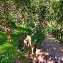 Reserva Natural Especial de Los Tilos de Moya