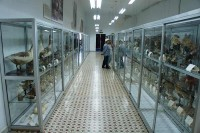 Museo de Ciencias Naturales de los Padres Paúles
