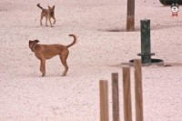 Área Canina Parque del Retiro