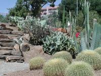 Jardin de Cactus y Suculentas
