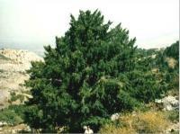 Parks Naturales Sierras de Tejeda, Alhama y Almijara