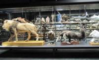 Museo de Ciencias Naturales de la Universidad de Navarra