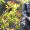 Espacio Natural de Candelario o Sierra de Béjar