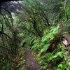 Reserva Natural Integral del Pijaral