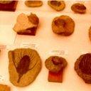 Museo de Fósiles de Adrián Martínez Tierno