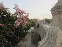 Jardín de la Lonja