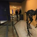 Museo Valenciano de Historia Natural