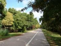 Paseo de la Alameda