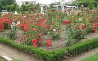 Parque de la Rosaleda Francisco Sabadell