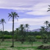 L Alcúdia