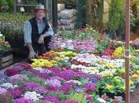 Jardines flotantes xochimilco ciudad de m xico hostales for Jardin xochimilco