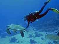 Snorkeling (buceo) en Isla La Roqueta