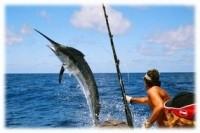 Charter Fishing Cancun