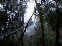 Área de Conservación Privada Bosque Nublado