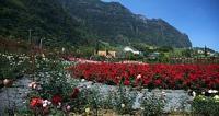 Jardín de rosas Quinta do Arco