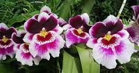 Jardín Orquídea