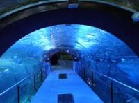 Aquarium- Palace of Mar de Donostia