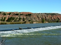 Sotos y mejanas del Ebro